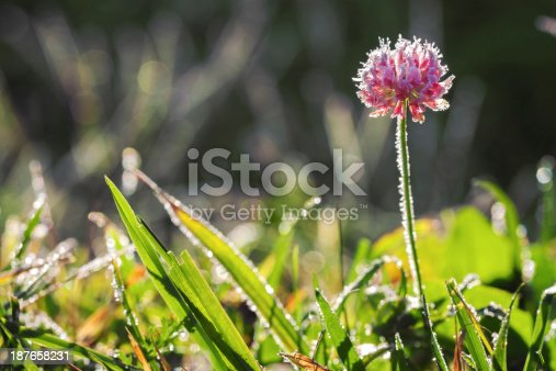 639394370istockphoto flower covered with hoarfrost 187658231