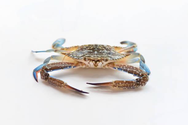 Flower crab on white background stock photo