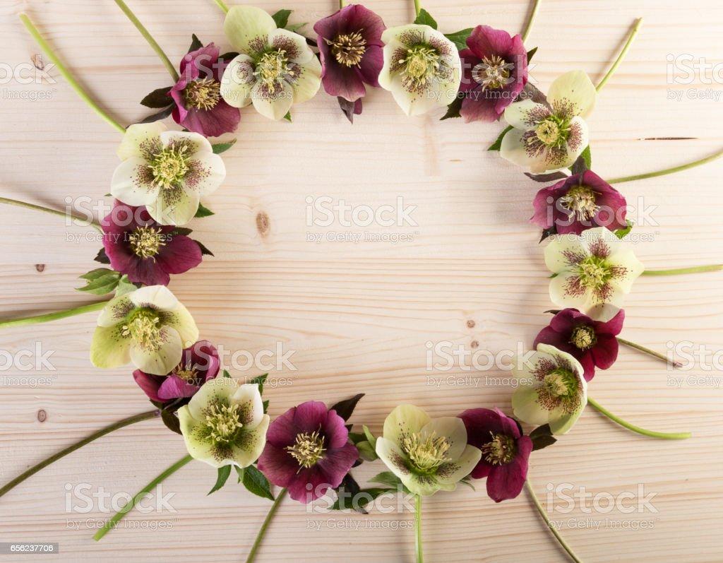 Flower creative arrangement wreath of hellebores or lenten roses over light wood stock photo