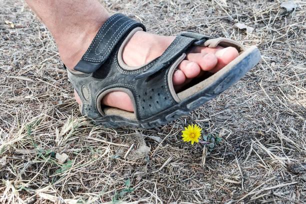 Fleur écrasée par un homme marchant dessus - Photo