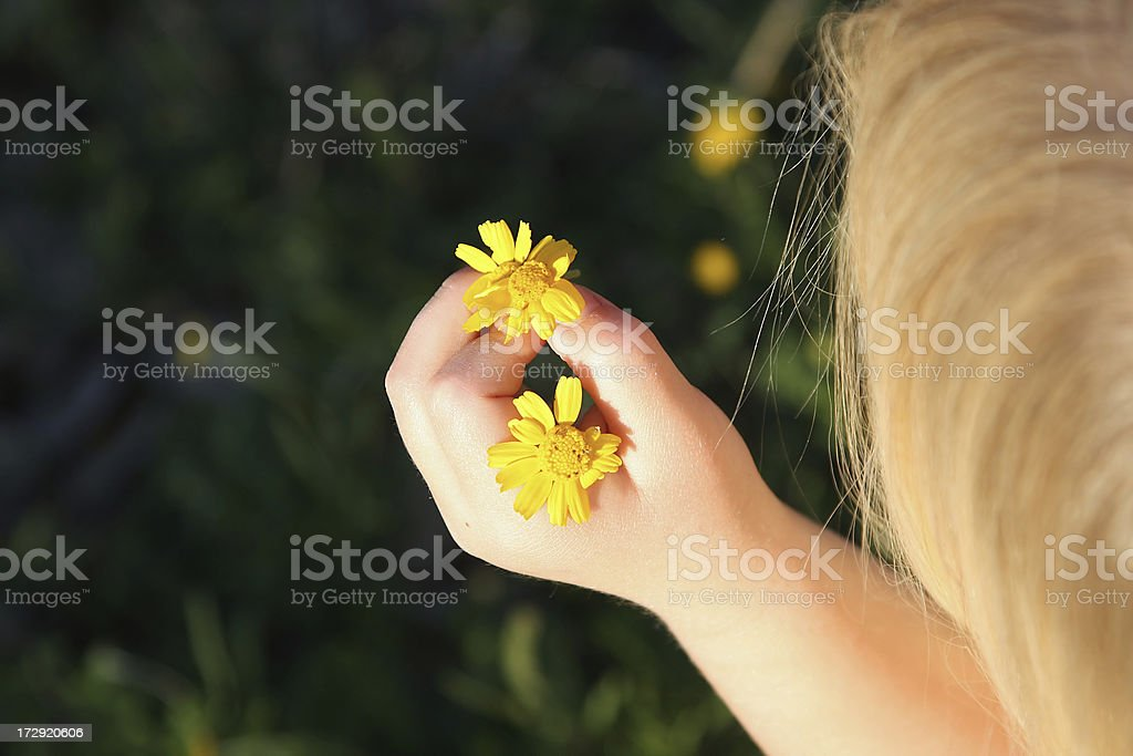 Flower Curiousity stock photo