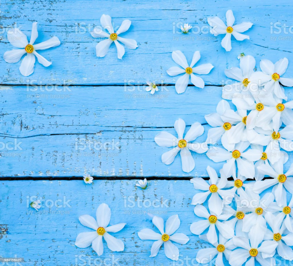 Flower. Daffodil. Spring flowers. Narcissus on blue wooden background. Bouquet of White Daffodils. Vintage Floral background. Greeting for Womens, Mothers Day, Valentine's day. Copy space stock photo