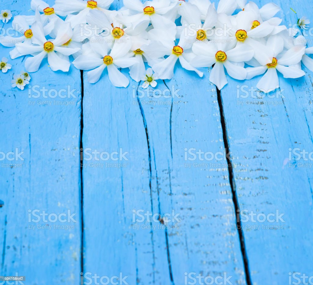 Flower Daffodil Spring Flowers Narcissus On Blue Wooden Background