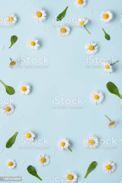 Flower daisy pattern flat lay frame composition with copy space picture id1082040650?b=1&k=6&m=1082040650&s=612x612&h=8g9pel7mimpu4bcyvkixs jjylrv9b1bi huaek34ku=