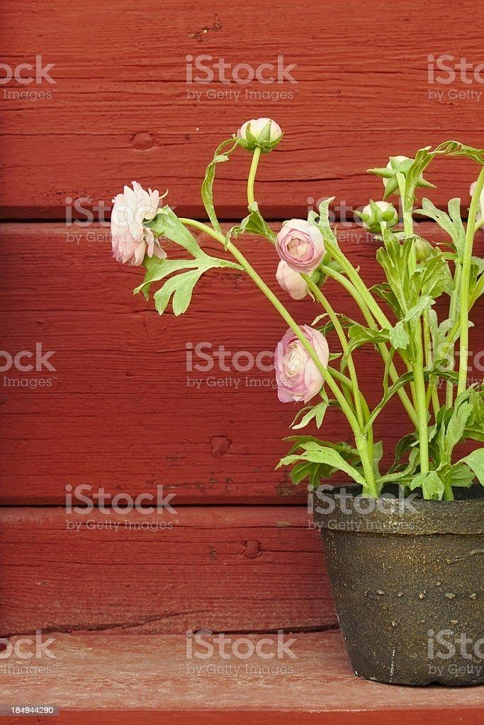 Flower decor royalty-free stock photo