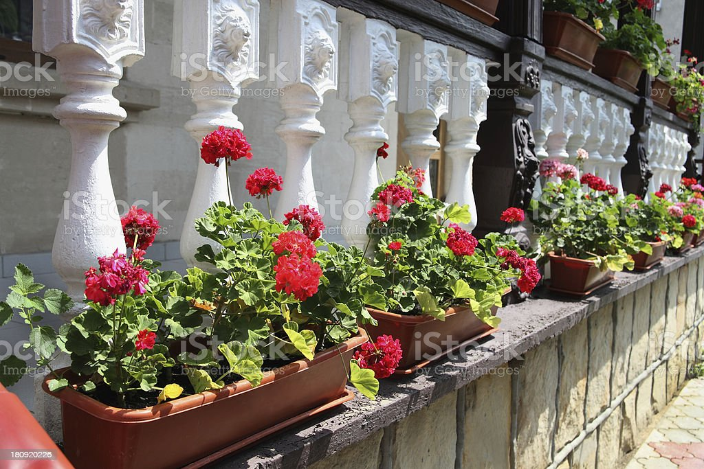 Terraza Decorada Con Flores De Una Asamblea En Moldavia Foto