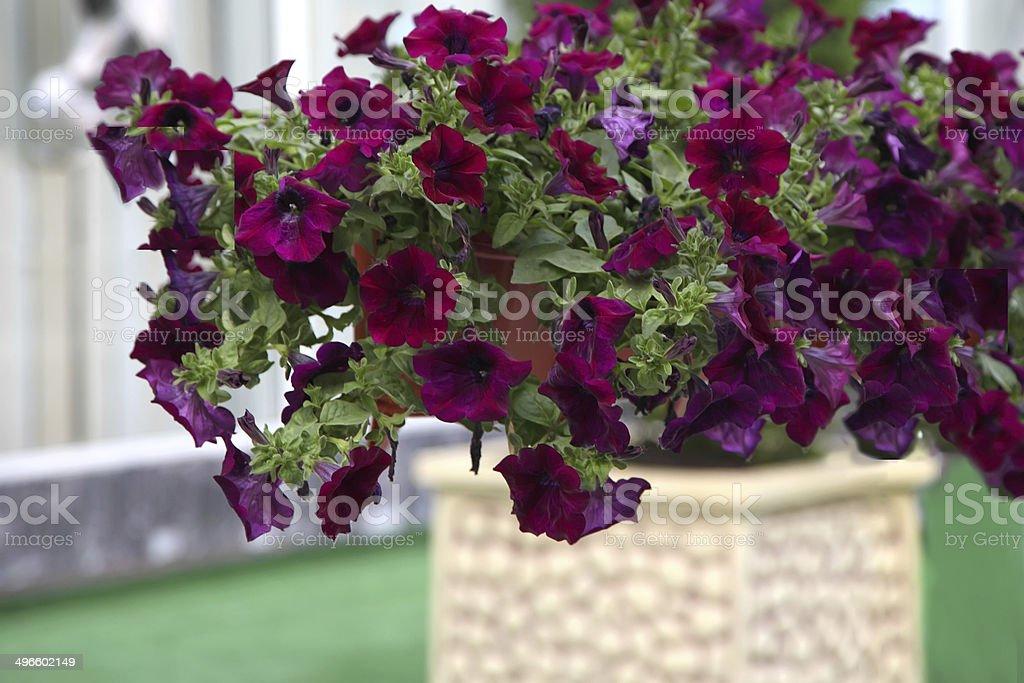Terraza Decorada Con Flores De Una Casa Foto De Stock Y Más