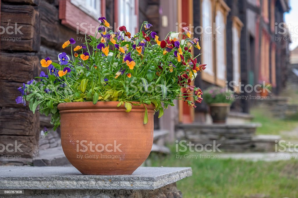https://www.istockphoto.com/no/photo/flower-decoration-gm590287908-101494213