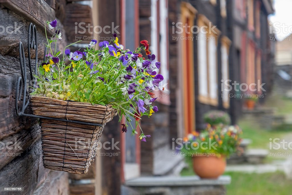 Flower decoration Flower decoration in Unesco mining town, Røros, Norway Aging Process Stock Photo