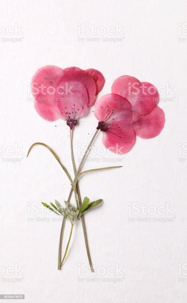 Flower decoration stock photo