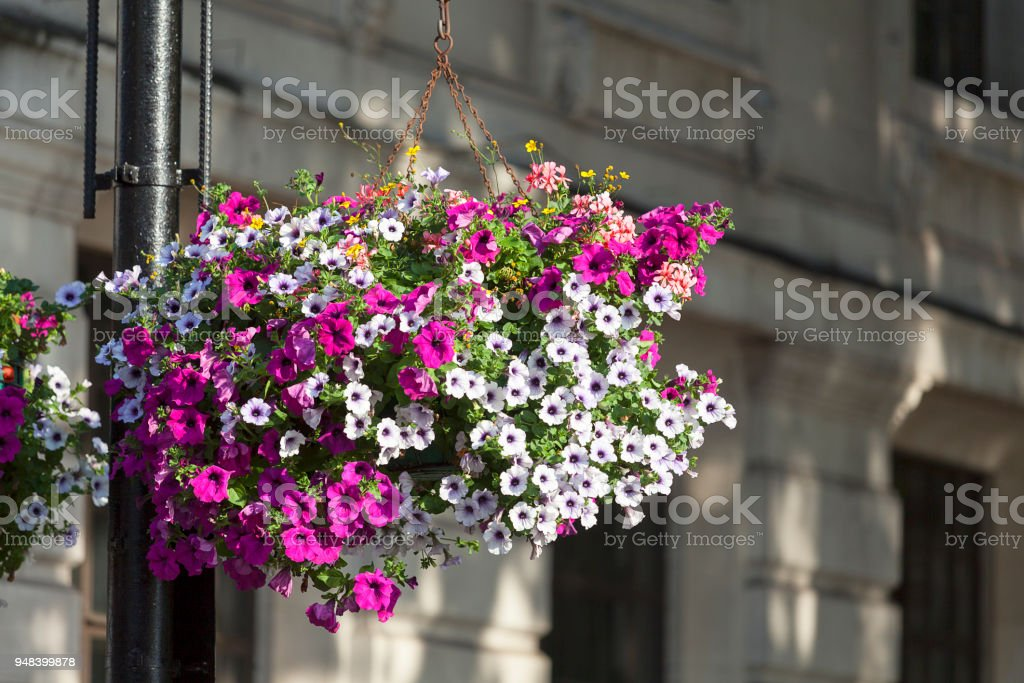 Flower decoration, typical view of the London street, London, United Kingdom. stock photo