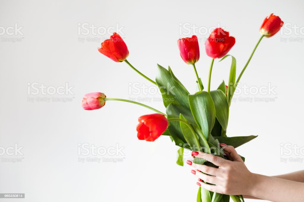 flower delivery florist holding red tulip bouquet zbiór zdjęć royalty-free