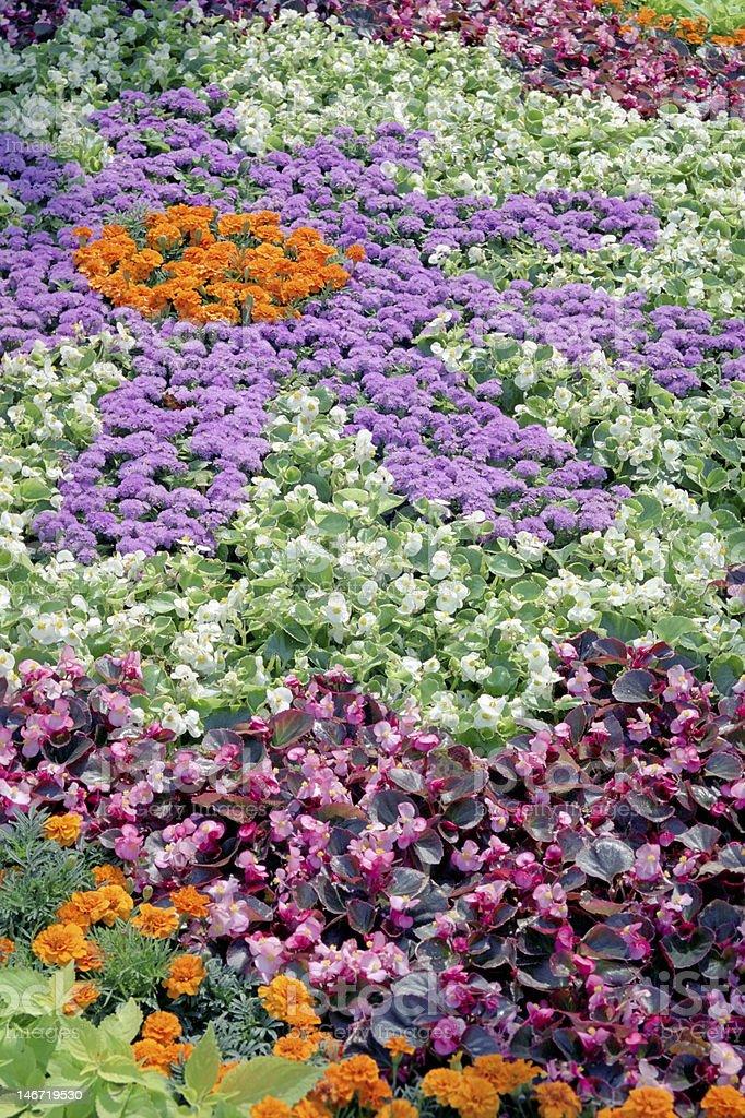 flower design royalty-free stock photo