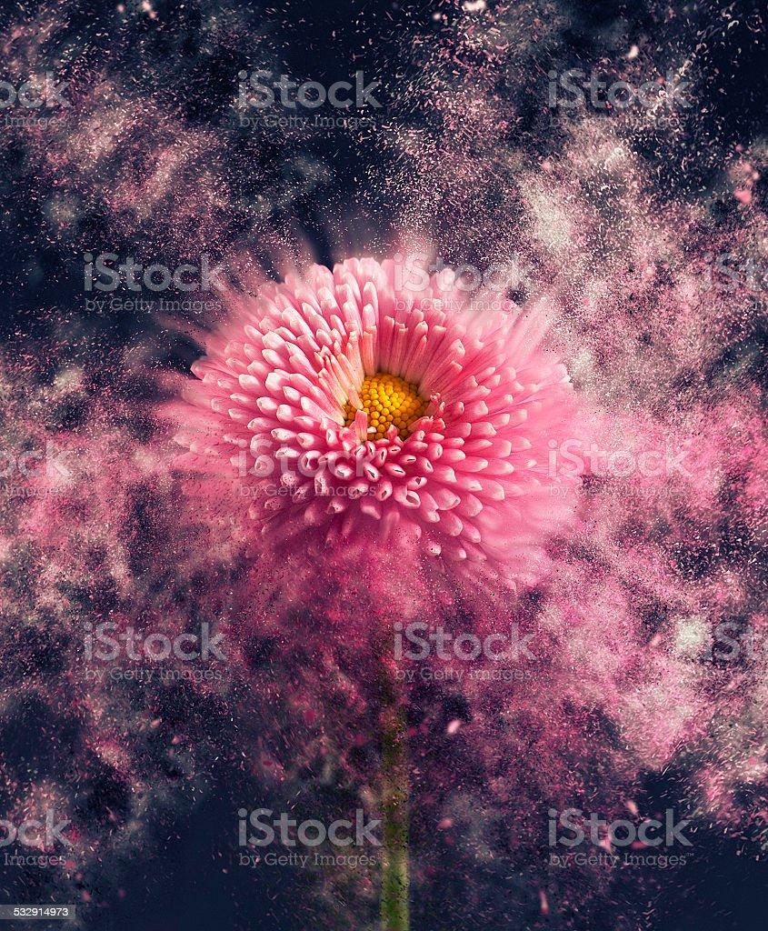 Flower - disintegrating stock photo
