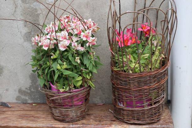 duo de fleurs - josianne toubeix photos et images de collection