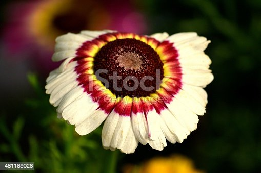 This photo shows a close up image of a beautiful white flower and colorful patterns in its petals