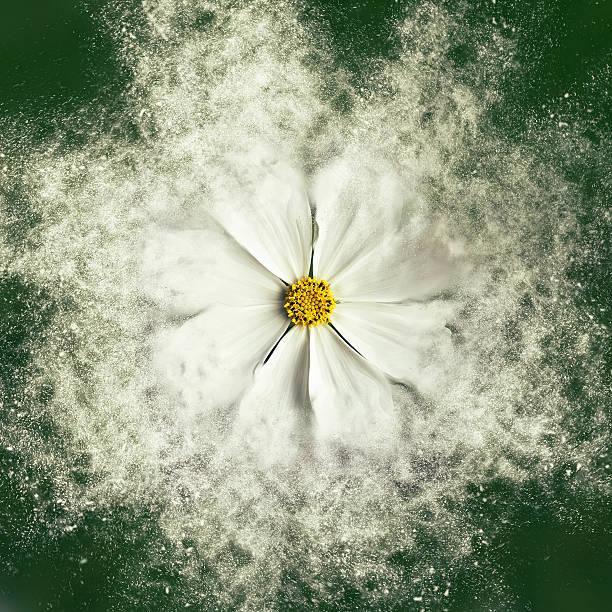 Flower - Exploding stock photo