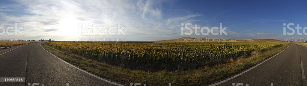 Flower Field and road wide Panoramic View royalty-free stock photo