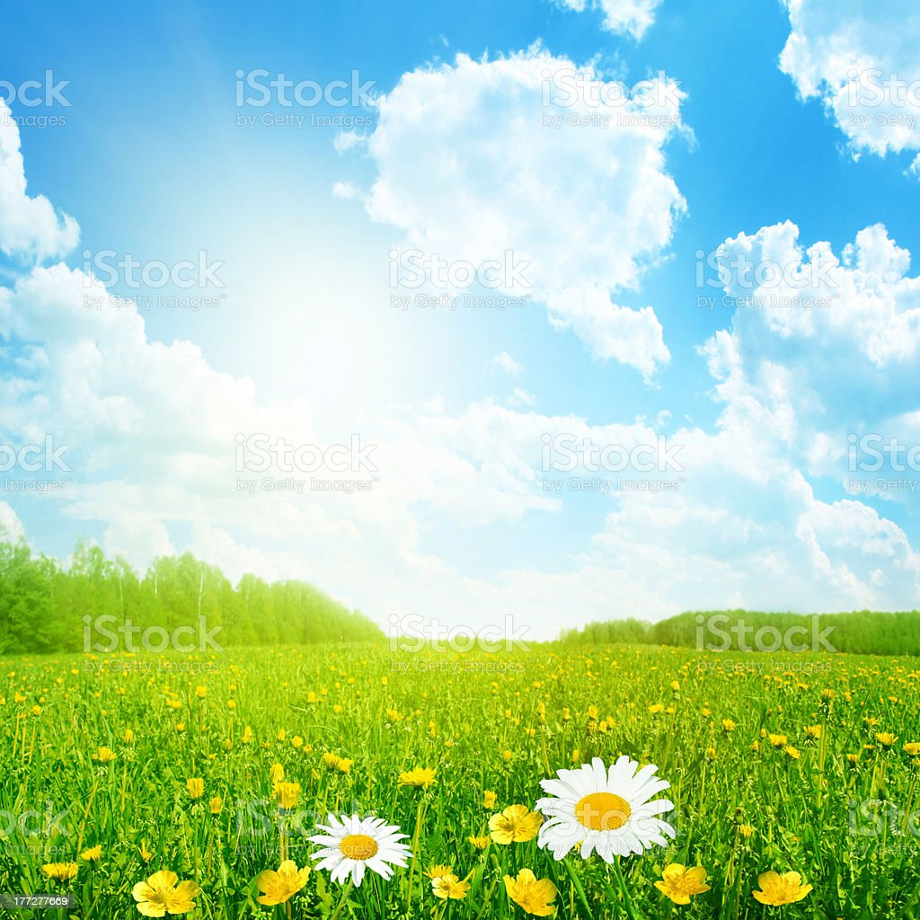 Flower field and sun on blue sky. stock photo