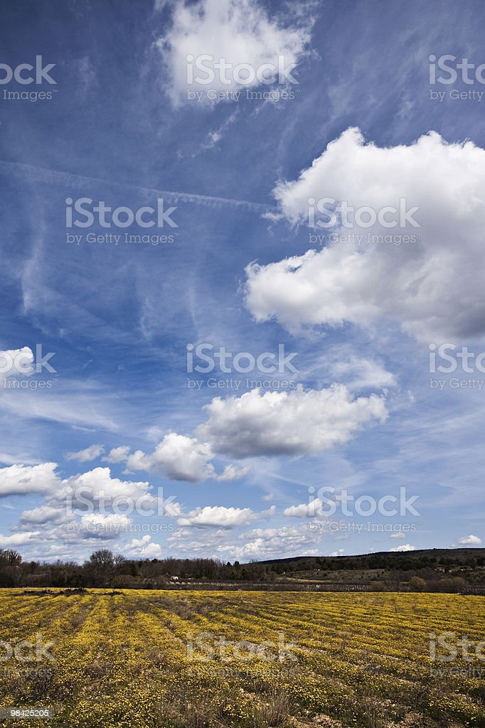 Flower field at spring royalty-free stock photo