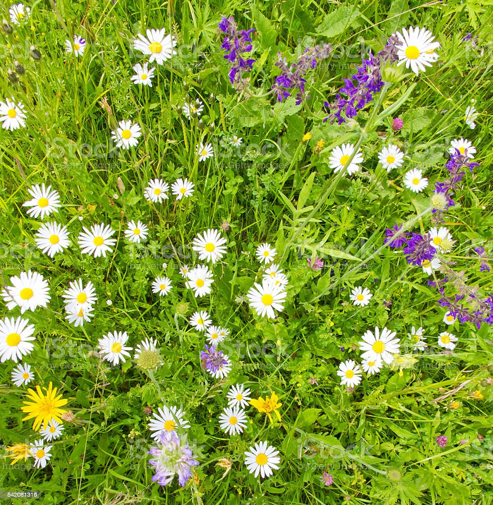 Flower field background stock photo