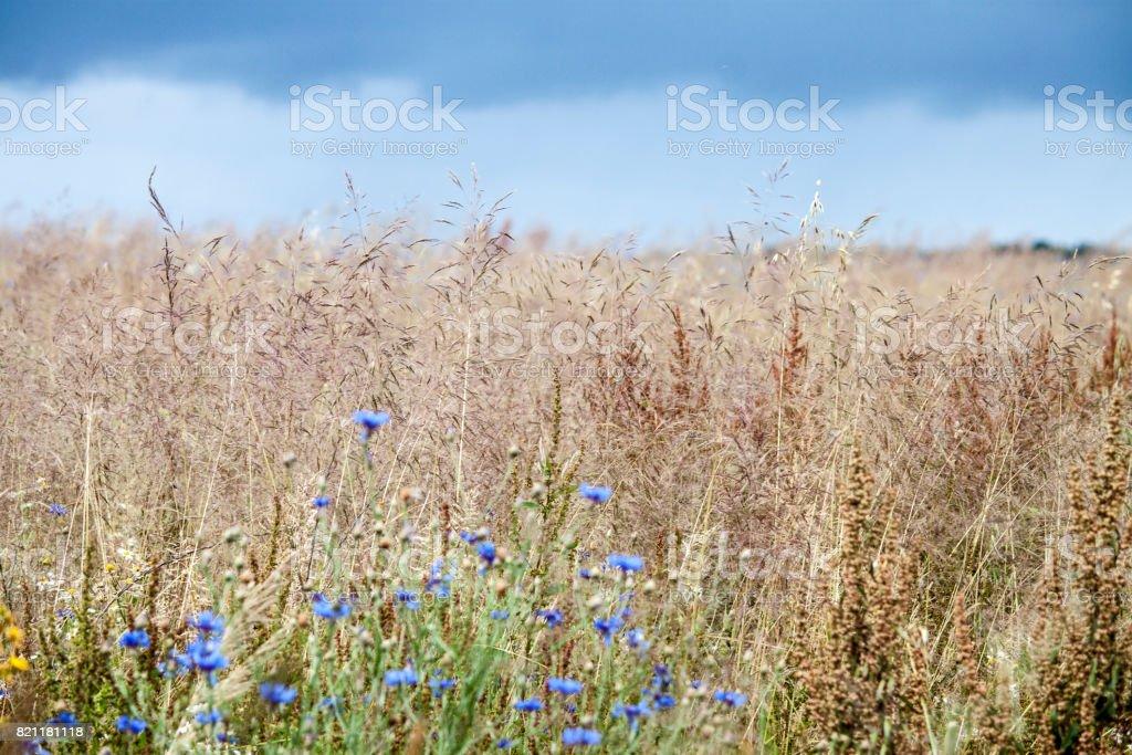 Blumenwiese vor Wolkenhimmel – Foto