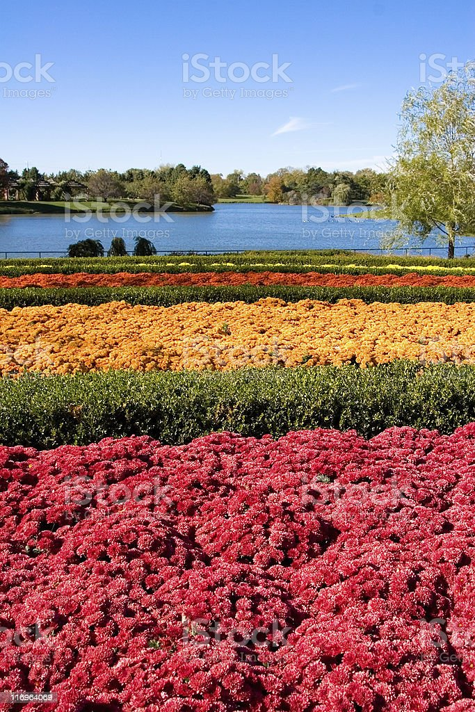 Flower Field in Botanic Garden Chicago stock photo