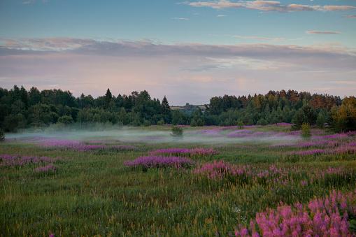 Flower field in the fog