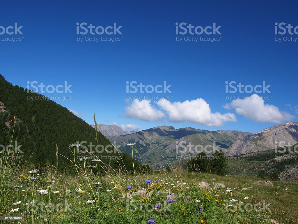 flower field in the French Alps royalty-free stock photo