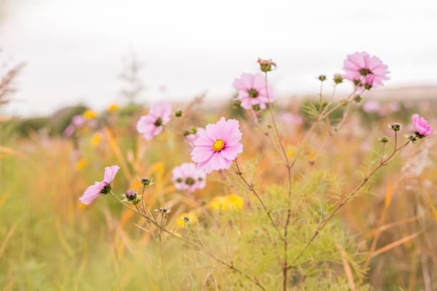 Flower field with wild flowers stock photo