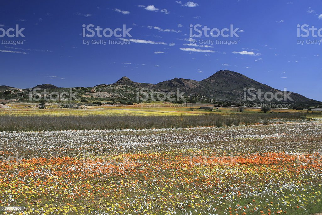 Flower filled valley stock photo