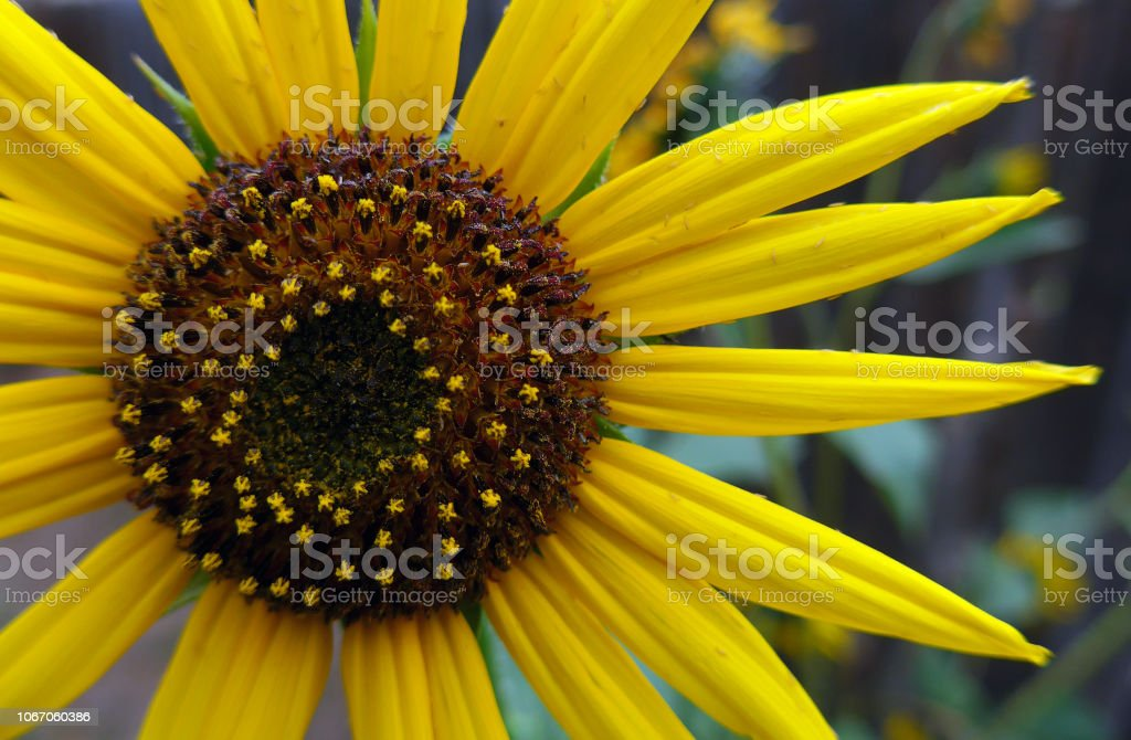 Flower Flag stock photo