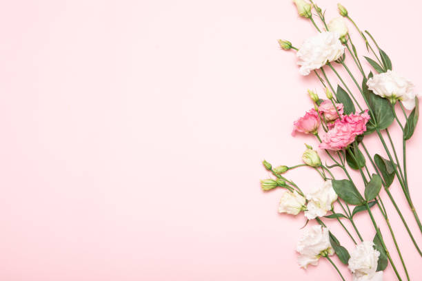 Flower flat lay for decorative design on beige background minimal picture id1206675481?b=1&k=6&m=1206675481&s=612x612&w=0&h=yan1zbyabuo1edzeggdwctbdlcrlajawfetan93vk9c=