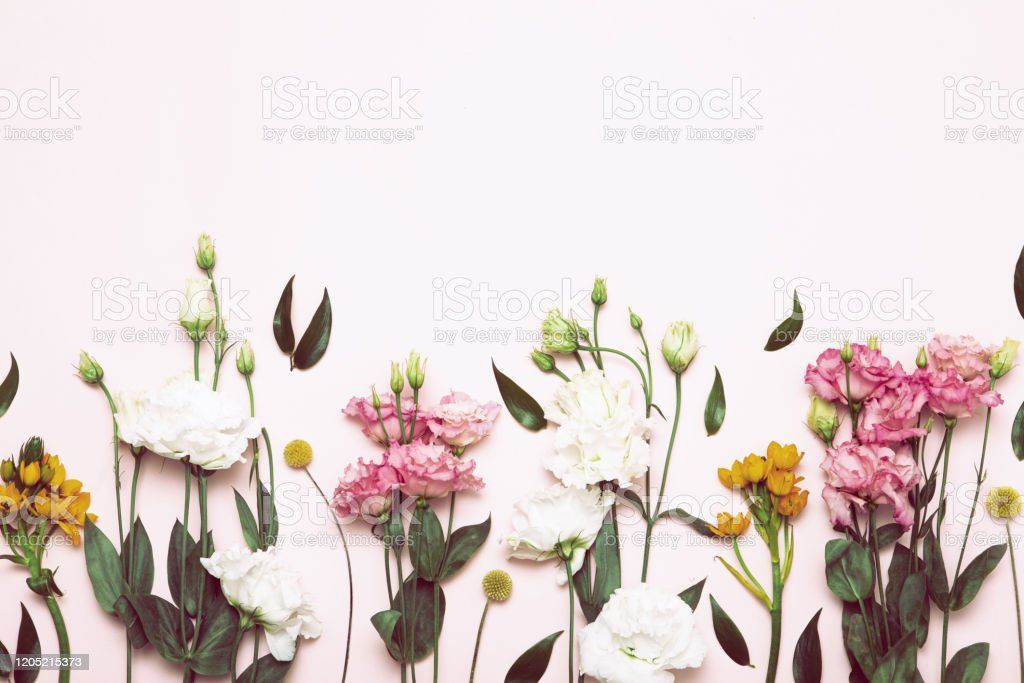 Flower flat lay for decorative design on white background. Minimal...