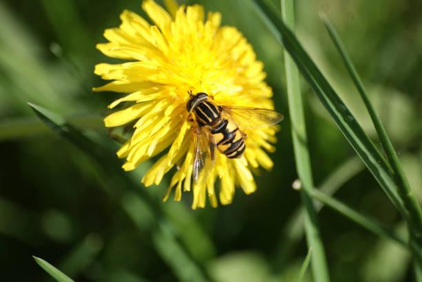 Blomma flyga bildbanksfoto