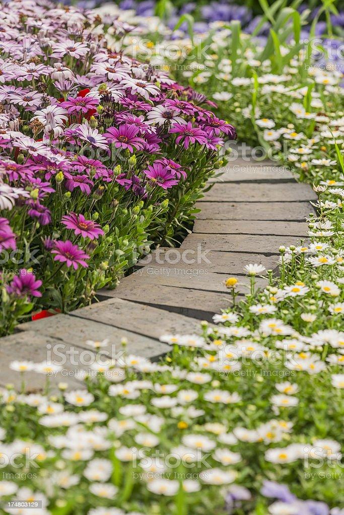 flower footpath royalty-free stock photo