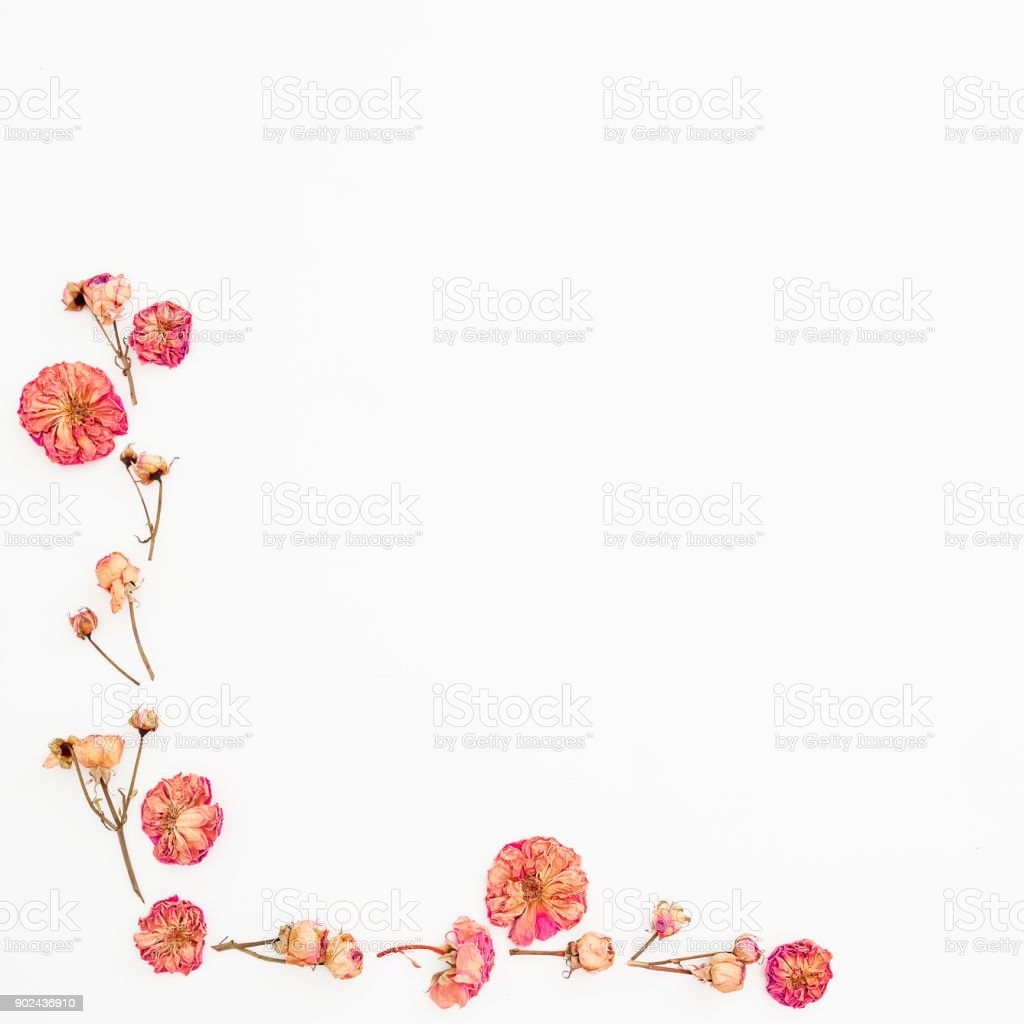 Flower Frame Made Of Roses On White Background Dried Flowers Flat ...