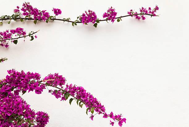 Marco de flores - foto de stock