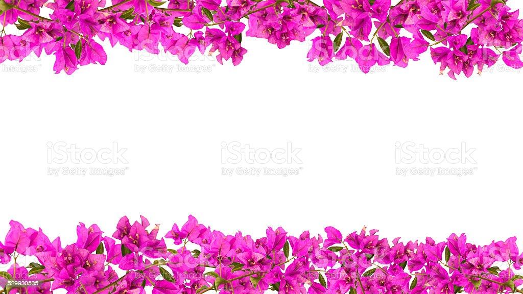 Flower frame – Foto