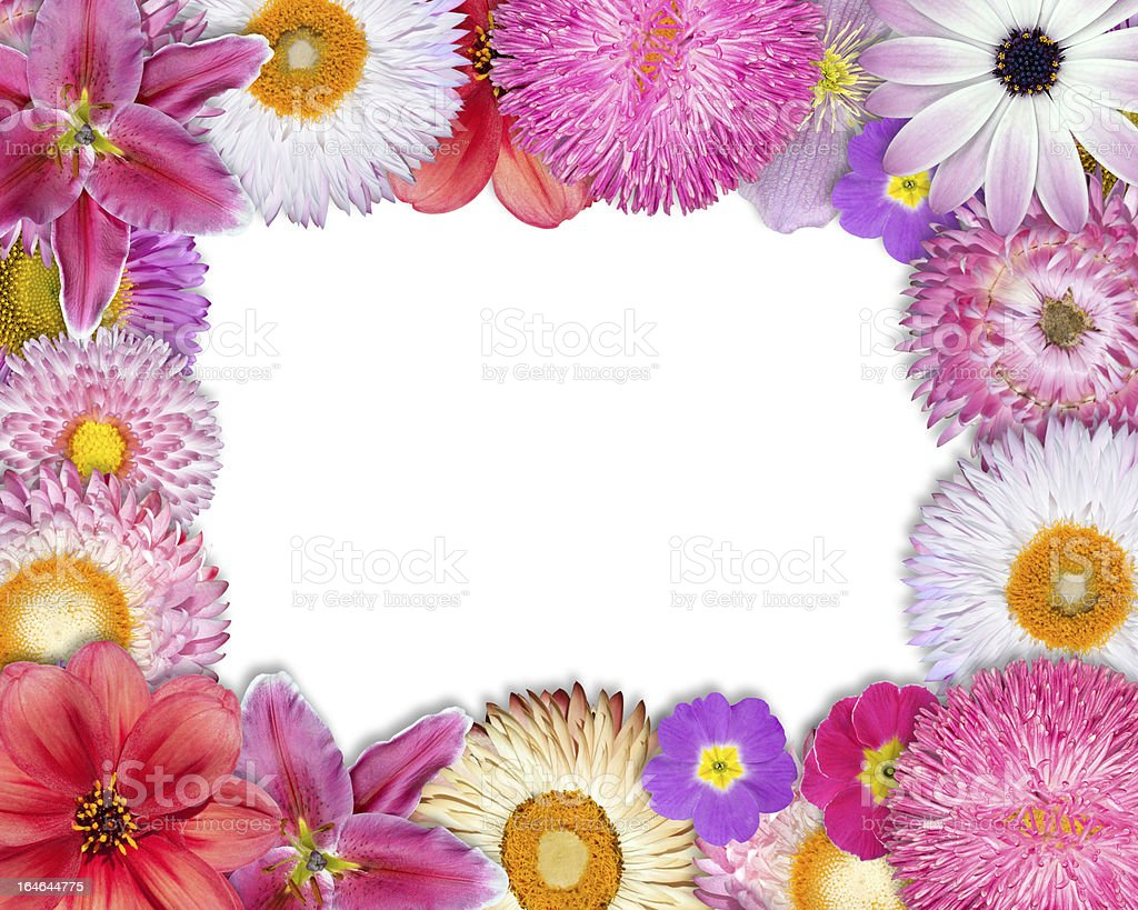 Flower Frame Pink, Purple, Red Flowers on White royalty-free stock photo