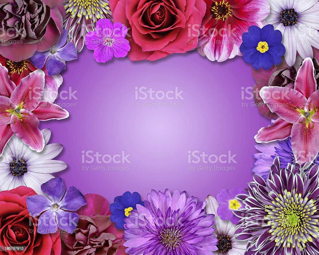 Flower Frame Pink, Purple, Red Flowers royalty-free stock photo