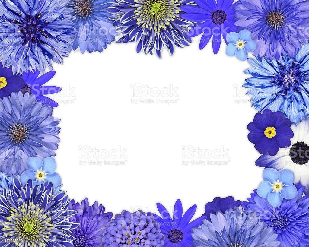 Flower Frame with Blue, Purple Flowers on White royalty-free stock photo