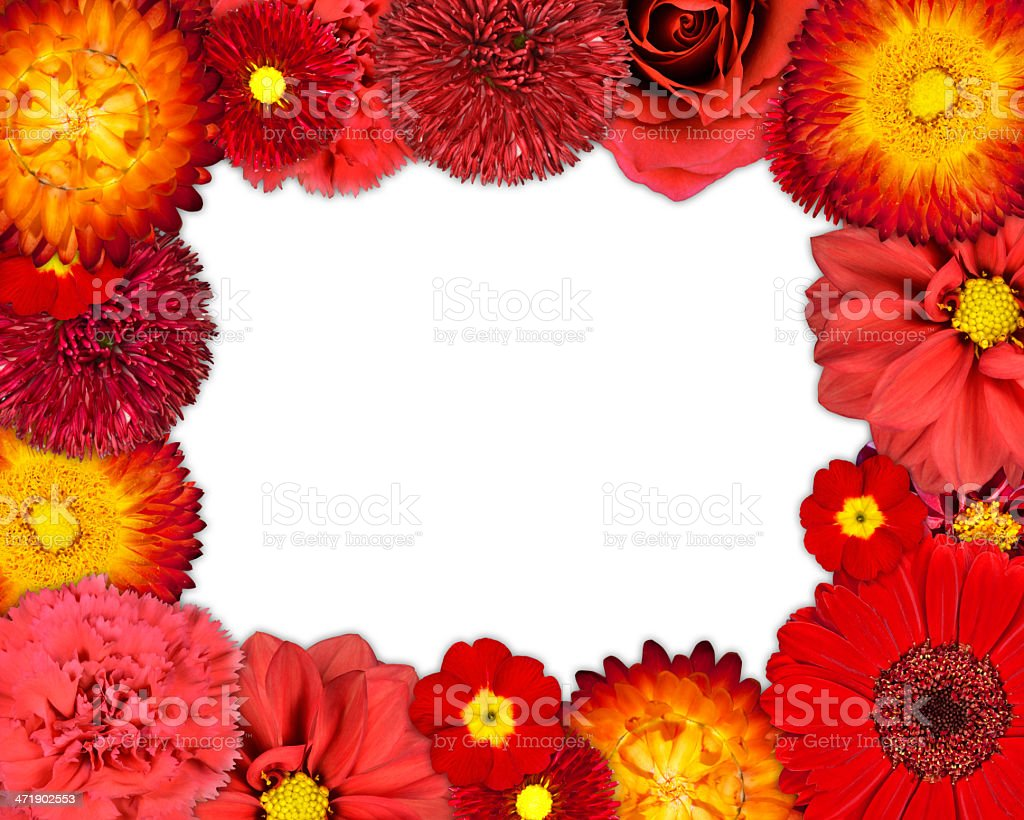 Flower Frame with Red Flowers on Blank Background royalty-free stock photo