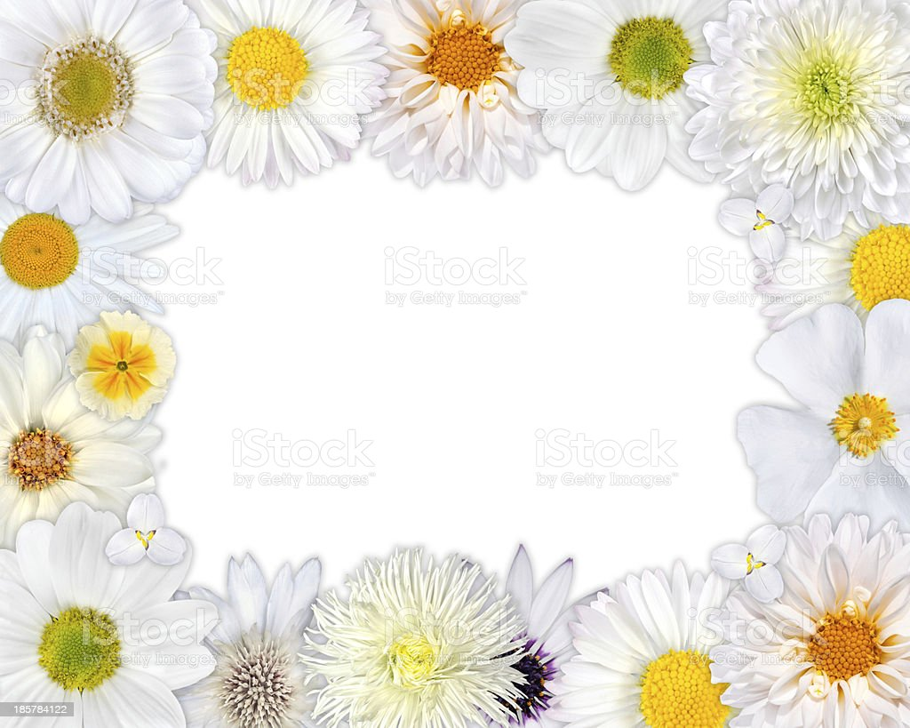 Flower Frame with White Flowers on Blank Background royalty-free stock photo