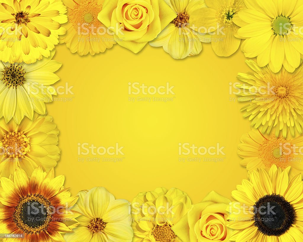 Flower Frame with Yellow Flowers on Orange Background royalty-free stock photo