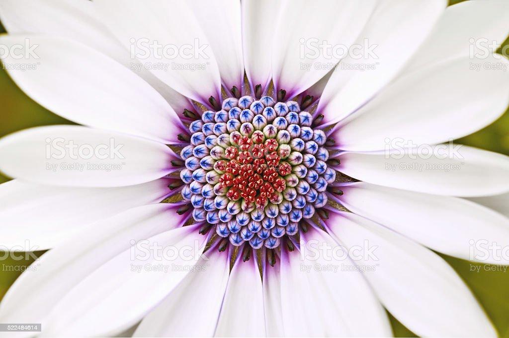 Flor cheio de cores-de-detalhe - foto de acervo