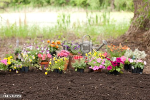 Intentionally Defocussed Flower Garden Background