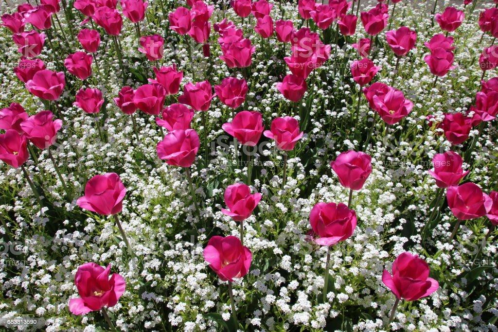 Blomma trädgård bakgrund royaltyfri bildbanksbilder