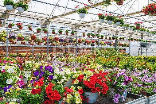 Flower garden interior full of plants. Plants growing in modern greenhouse.