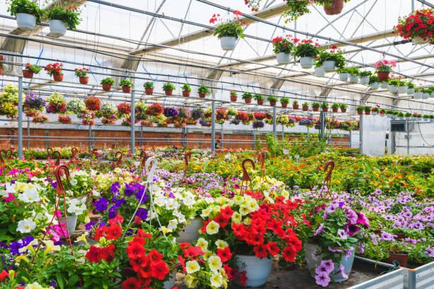Blume Garten Gewächshaus – Foto